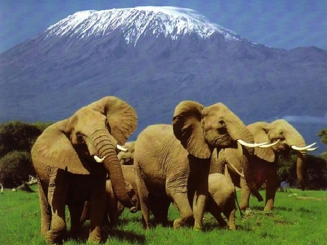 AFRICA EAST COAST